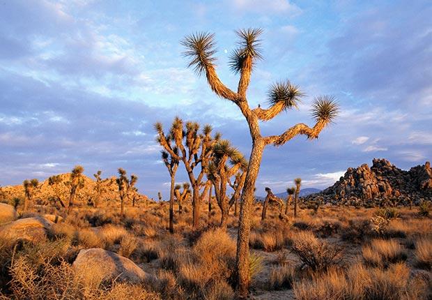 Parque Nacional Joshua  Tree cerca de Palm Springs, CA - Las mejores vacaciones a un buen precio para el 2014
