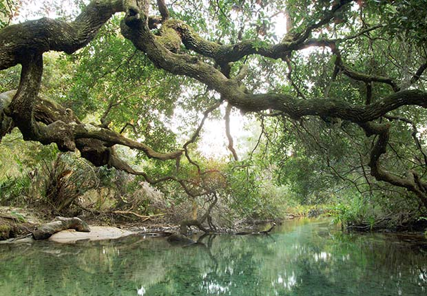 Bosque Nacional de Ocala, cerca de Orlando, FL. - Las mejores vacaciones a un buen precio para el 2014