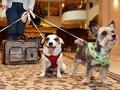 Los perros llegan a un hotel, Hoteles y Resorts que admiten mascotas