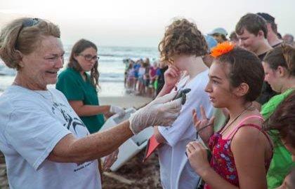 Los turistas ven como las tortugas marinas golfinas recién nacidas se liberan en el Golfo de México - 5 playas familiares en Estados Unidos