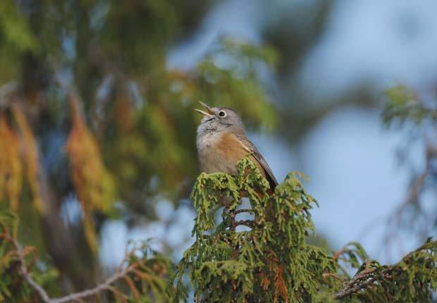 Pájaro posa sobre un árbol en el Big Bend National Park - Experiencias increíbles en los parques nacionales