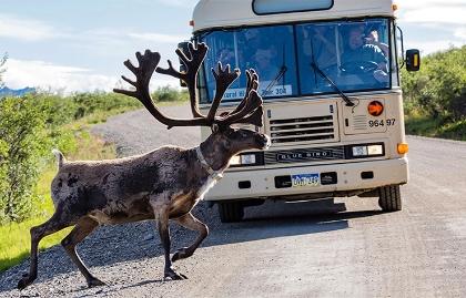 Lugares recomendados para unas vacaciones en Estados Unidos - Bus en Denali National Park en Alaska.
