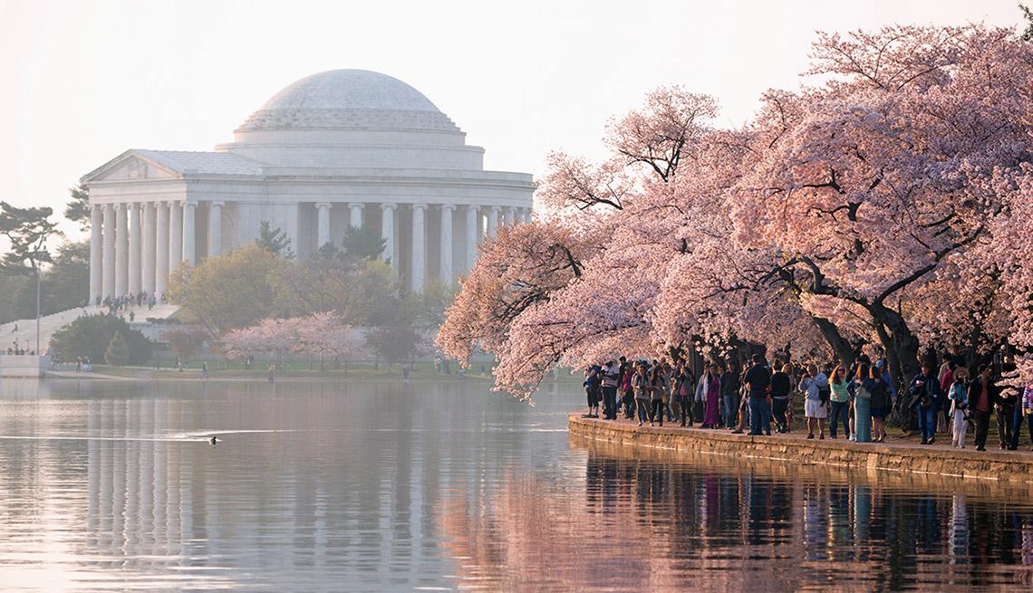 item 3 of Gallery image - Se ven en primer plano las flores de cerezo de los árboles Yoshino en Washington DC.