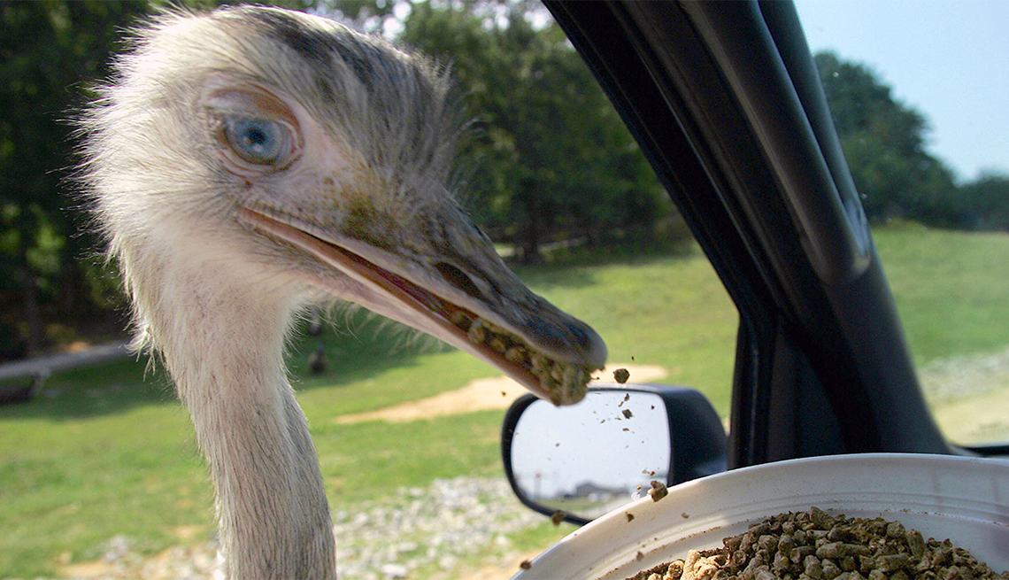 item 5 of Gallery image - Un ave se alimenta a través de la ventana de un automóvil