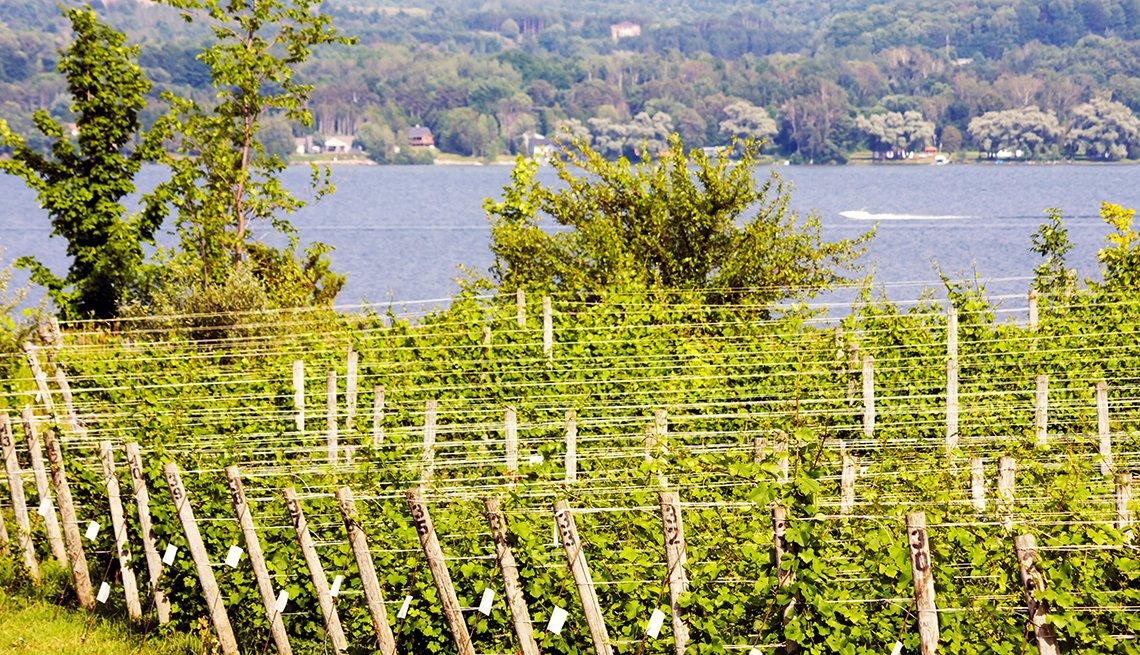 item 9, Gallery image. El viñedo queda cerca da la bodega sur del lago Leelanau.