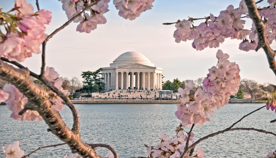The Jefferson Memorial during Cherry Blossom Festival
