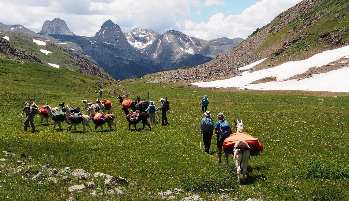 Excursionistas caminan junto a un grupo de llamas