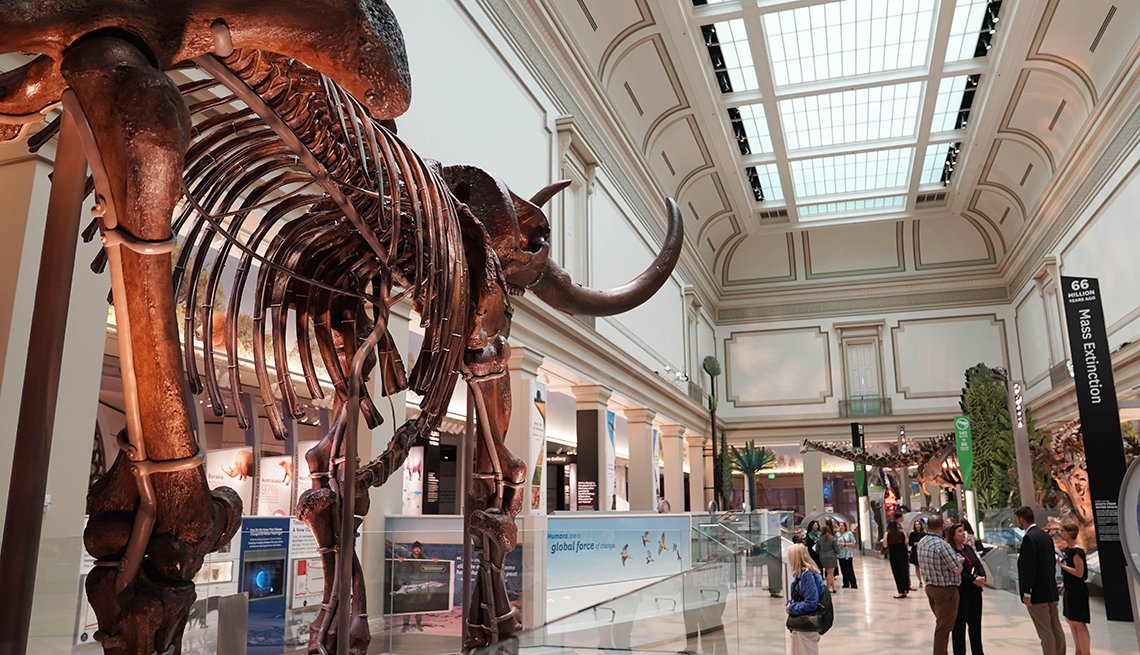 Gente visita la nueva sala de dinosaurios y fósiles del Museo Nacional de Historia Natural del Smithsonian en Washington, D.C.