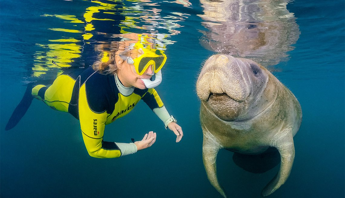 female snorkeler swims with manatee in Florida