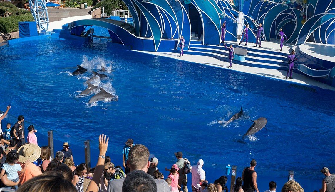 Exhibición de delfines en el zoológico de San Diego
