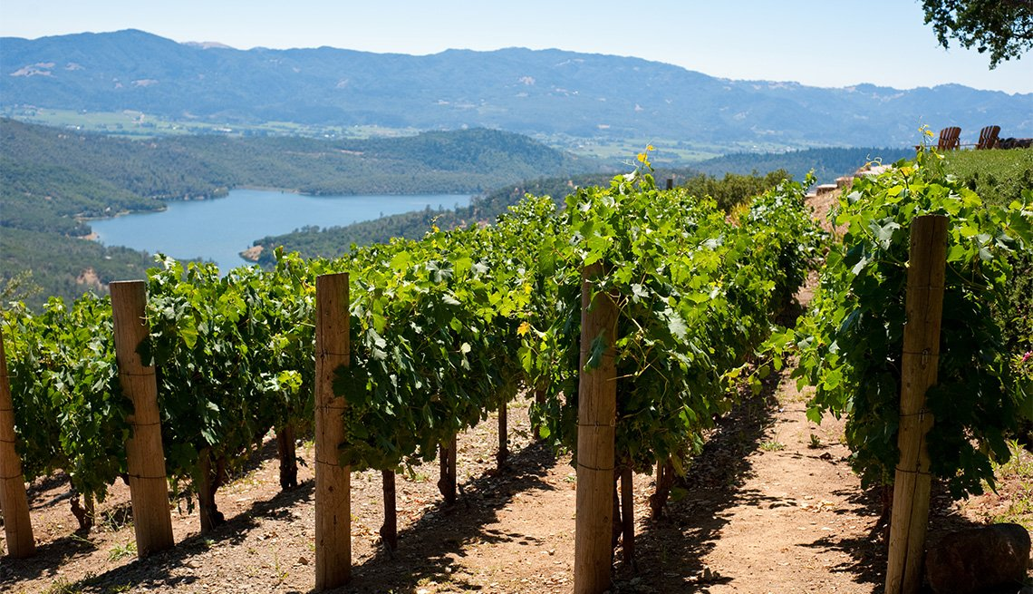 Rows of hillside vineyards above Napa Valley, lake in background.