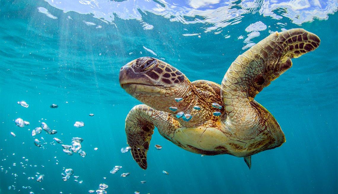 Tortuga marina bajo el agua