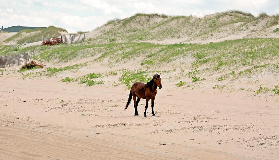 item 9 of Gallery image - wild pony on Carova Beach