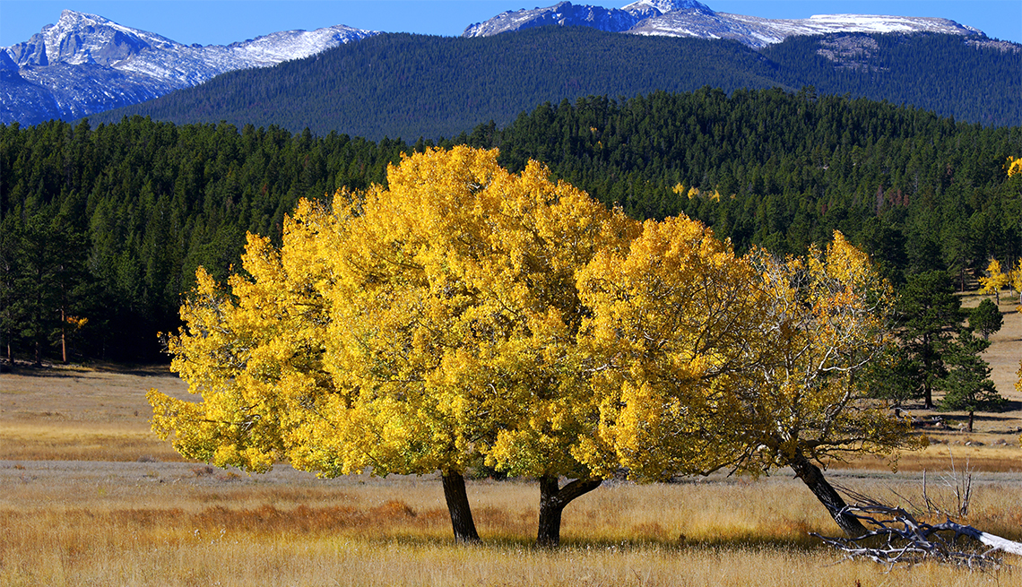 item 13, Gallery image. By mid-September the park's golden aspens turn a brilliant shade of yellow.