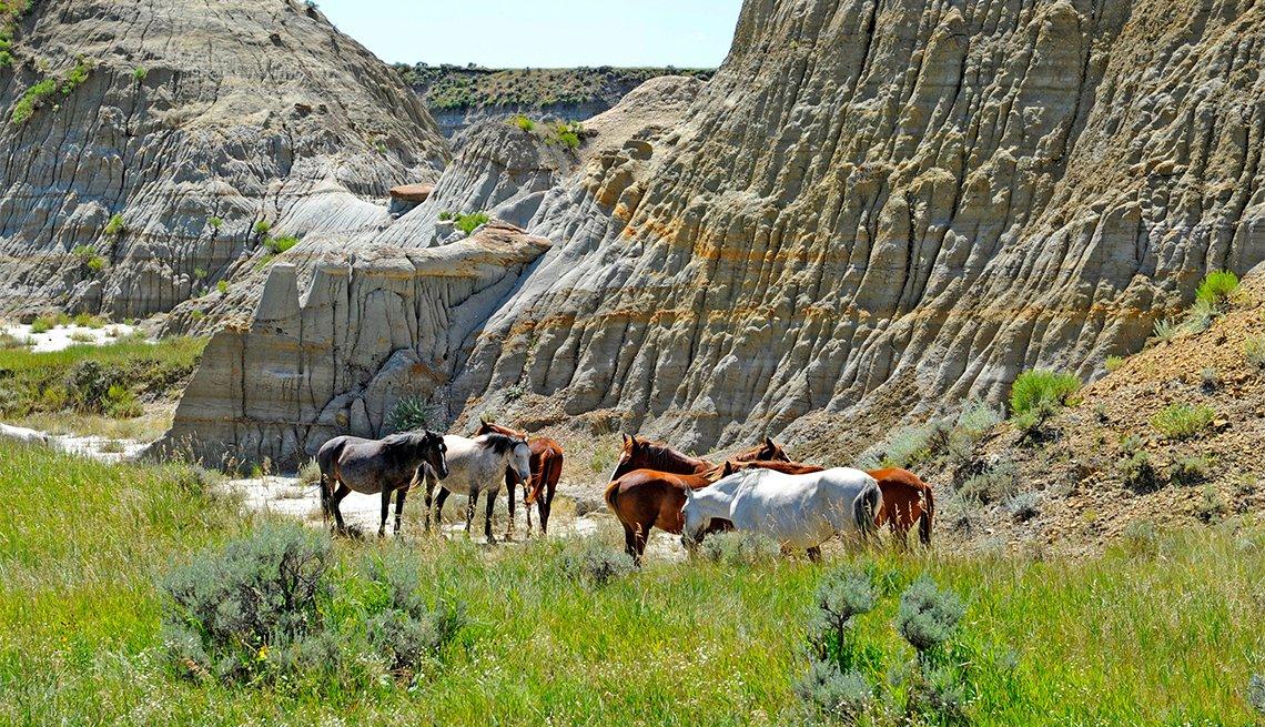 Wild Horses at Theodore Roosevelt National Park, North Dakota