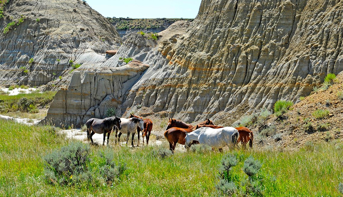 Wild Horses at Theodore Roosevelt National Park, North Dakota