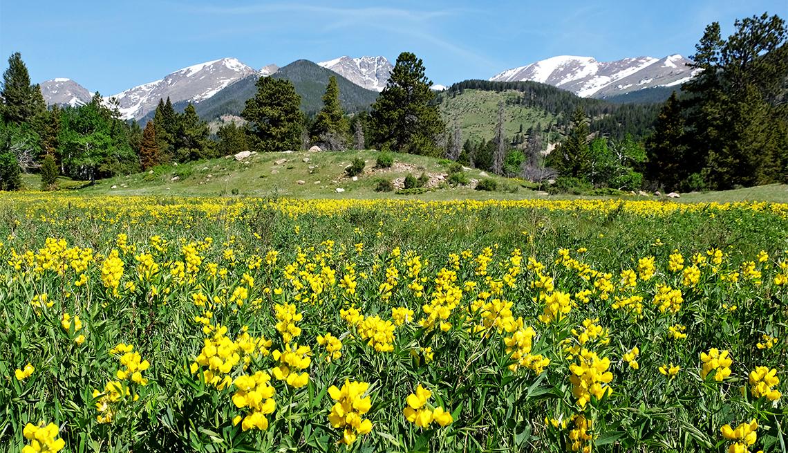 Flores en el parque nacional Rocky Mountain