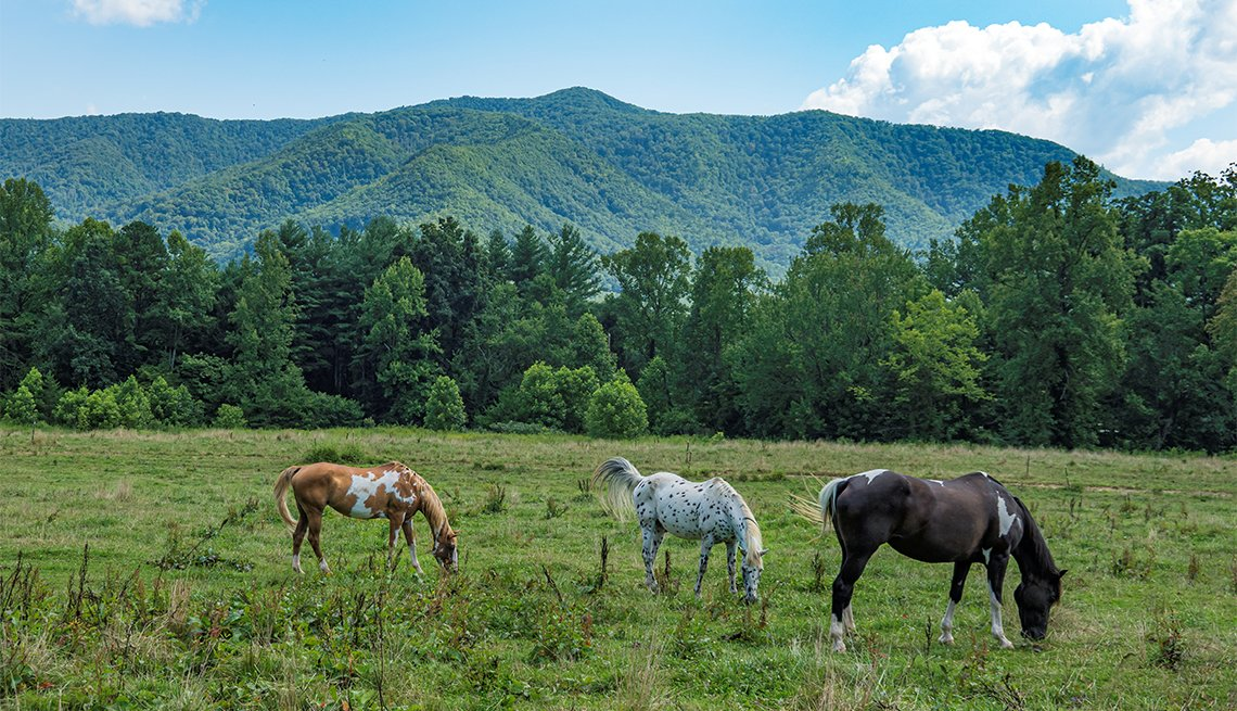 Beautiful horses in a Tennessee meadow with the Smoky Mountains in the background