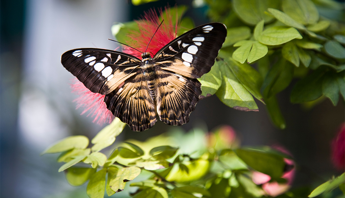 item 4 of Gallery image - Mariposa sobre una planta