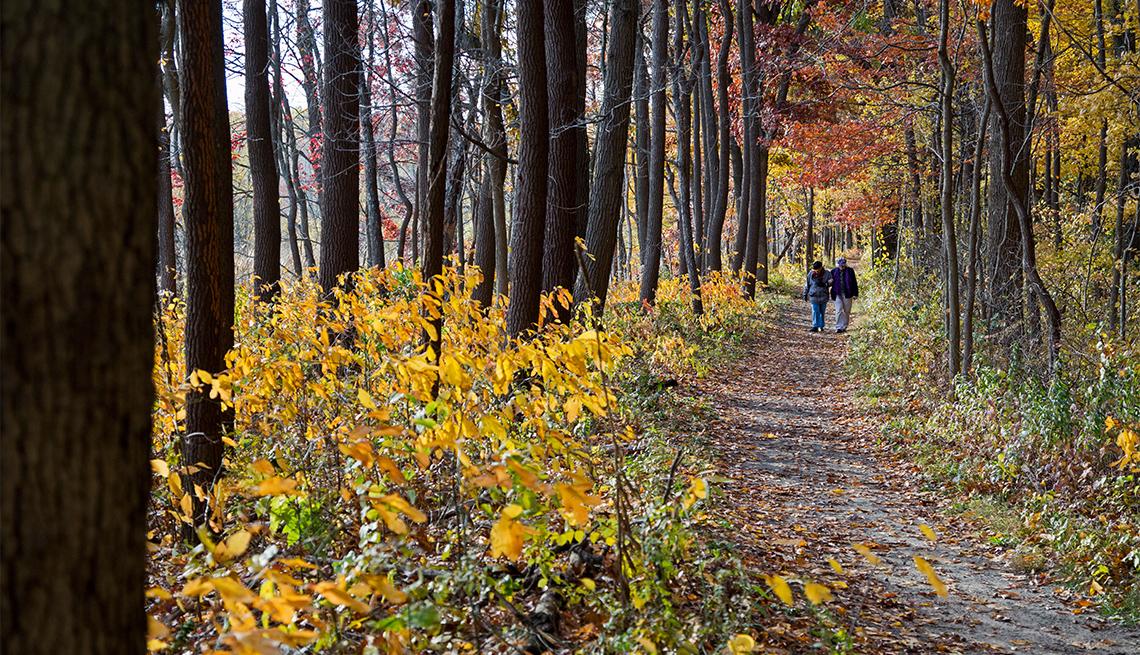 item 5 of Gallery image - Dos personas caminan por un sendero entre los árboles