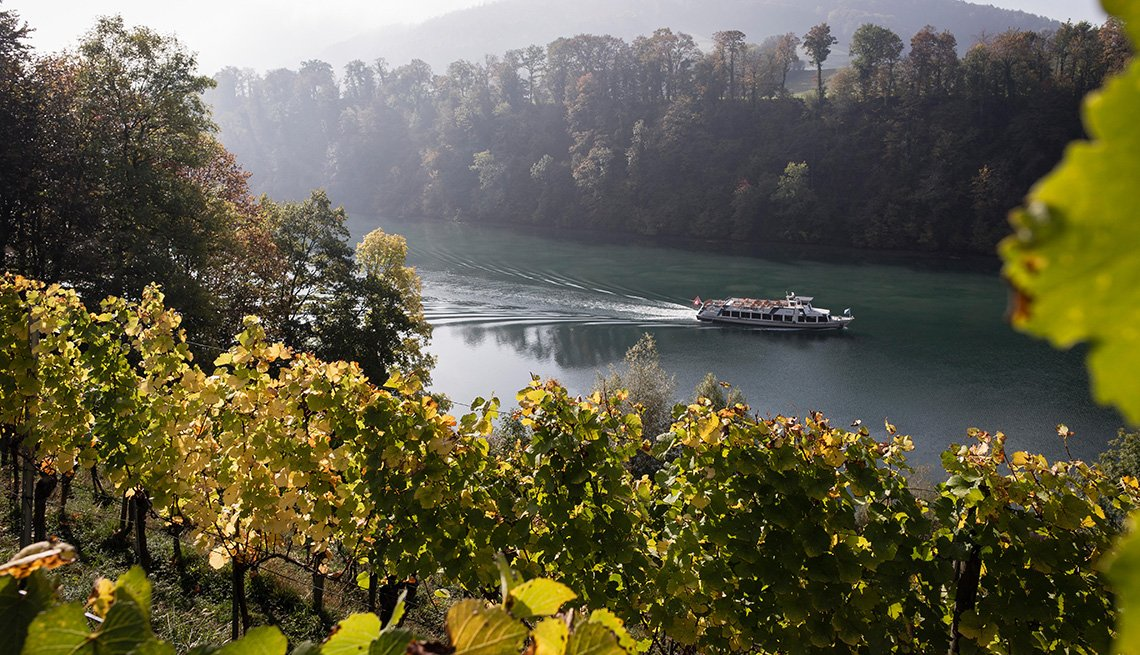 Vineyard on the Rhine river