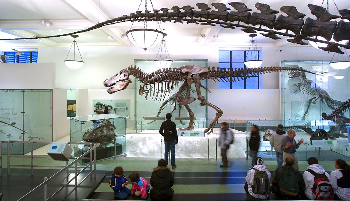 item 11 of Gallery image - Rex Display Museum Natural History New York