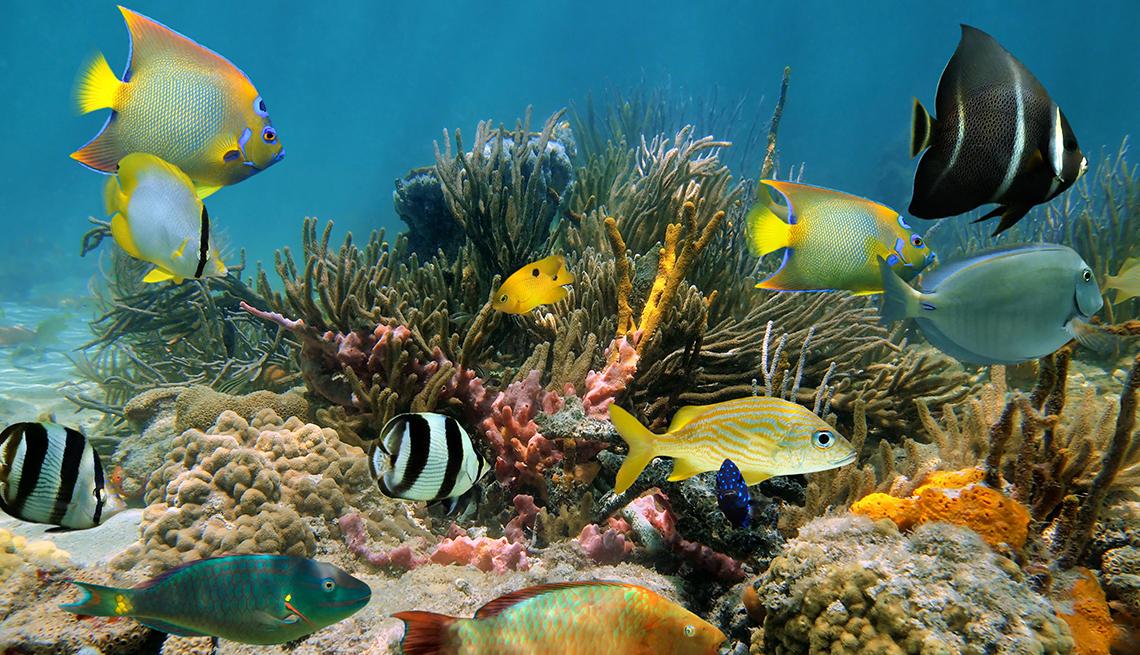 item 3 of Gallery image - Peces de colores en un acuario.