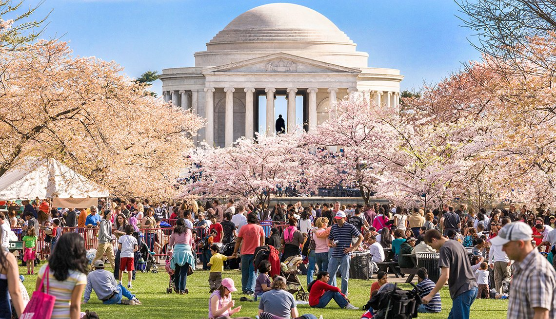 people gather around Cherry blossom trees in Washington, DC