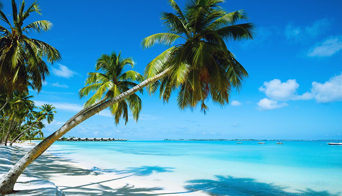 Beautiful Bahamas beach with palm trees