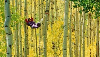 Una persona acostada en una hamaca en la mitad de un bosque