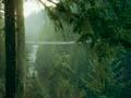 Puente Colgate Capilano en Vancouver, British Columbia – Seis puentes para no perdérselos.