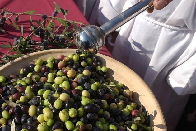Festival de la oliva en el valle de Sonoma - Ocho grandes festivales gastronómicos