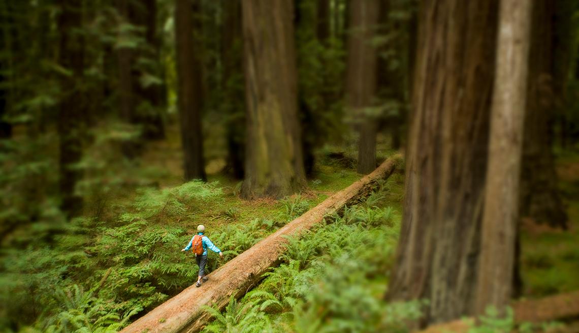 Redwood Coast, California - 10 maravillas naturales en Estados Unidos