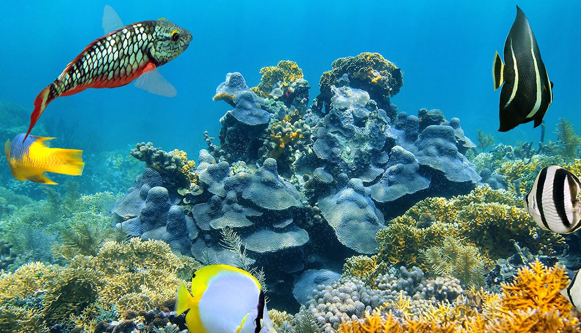 Tropical Fish Swim In The Water By Colorful Coral In The Barrier Reef Of Belize, Belize Barrier Reef