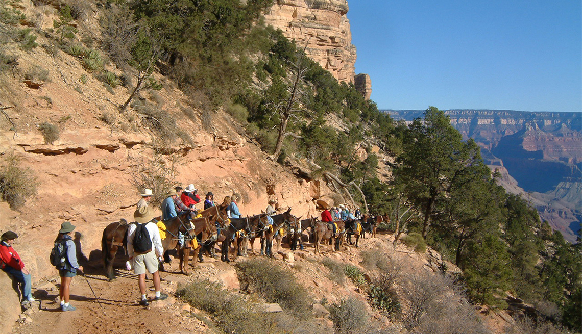 item 5 of Gallery image - Riding mules down into Grand Canyon