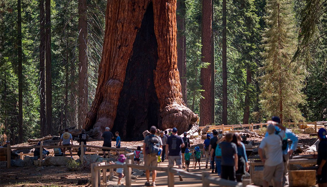 Visitors look at the Grizzly Giant tree in the Mariposa Grove of Giant Sequoias in Yosemite National Park