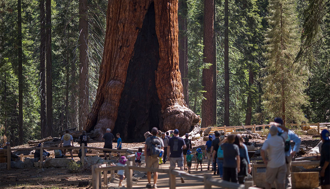 item 1 of Gallery image - Visitors look at the Grizzly Giant tree in the Mariposa Grove of Giant Sequoias in Yosemite National Park
