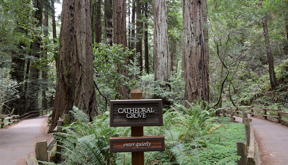 item 5 of Gallery image - Trail through the Cathedral Grove of Coast Redwoods, Sequoia sempervirens, Muir Woods National Monument