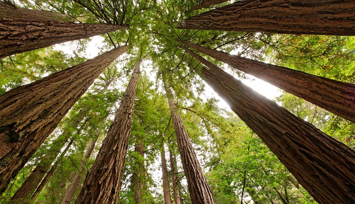 Árboles en el parque Monumento Nacional Muir Woods