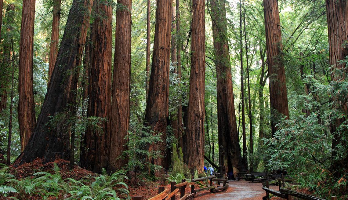 item 4 of Gallery image - Muir Woods National Park walkway