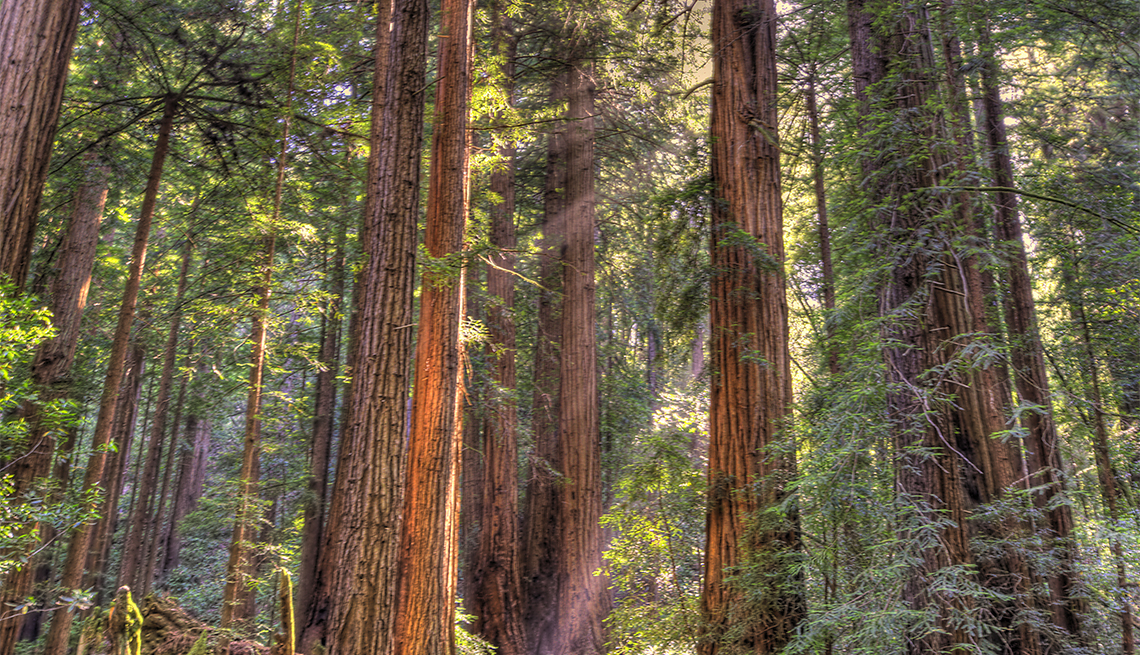 item 1 of Gallery image - Giant redwoods in Muir Woods National Forest