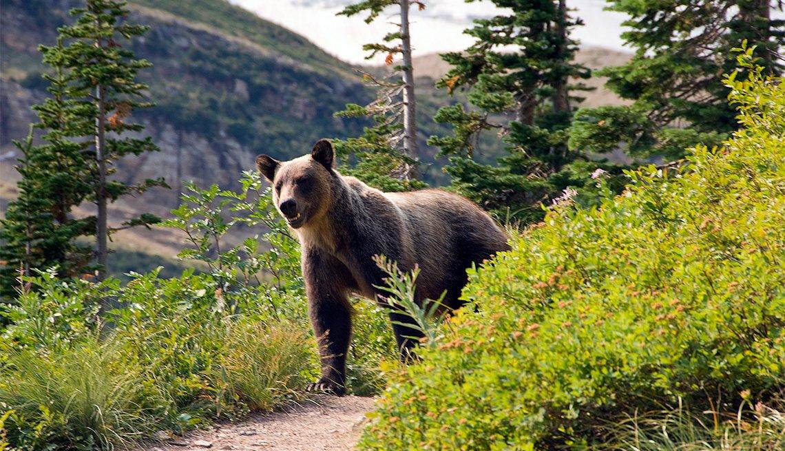 item 6 of Gallery image - Un oso en el Glacier National Park