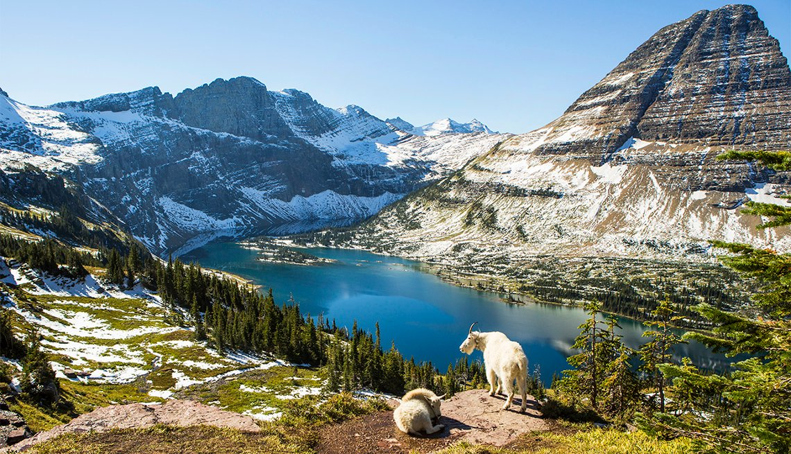 Goats standing on an overlook at Glacier National Park