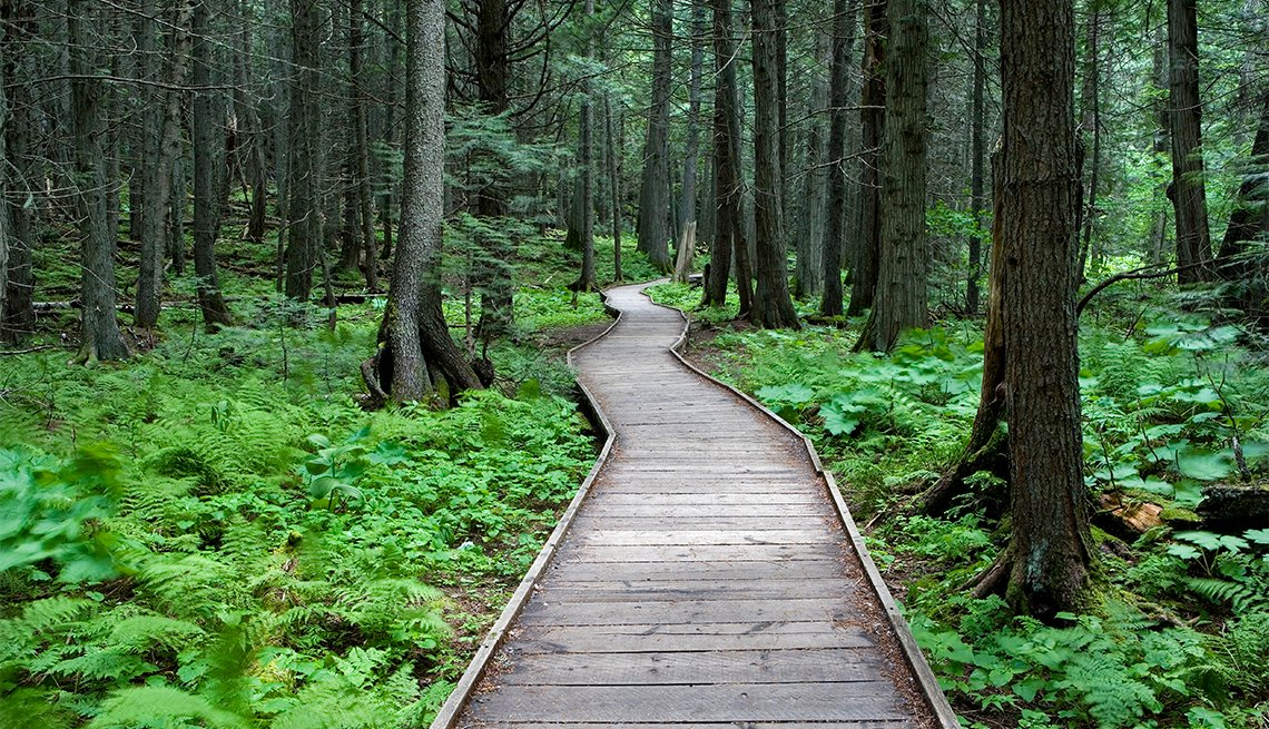 item 5 of Gallery image - Trail of the Cedars
