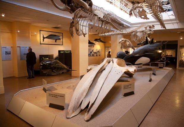 Museo de la Mer in Biarritz. - Imágenes del país Vasco