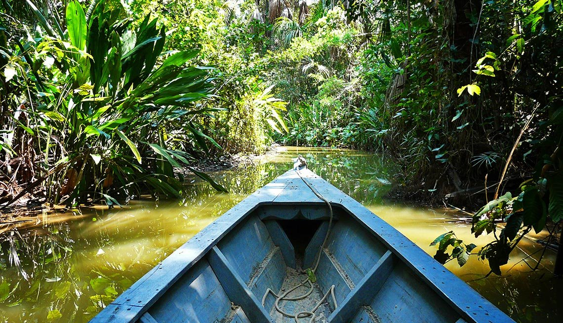 View from a boat looking at the Amazon river and jungle, Captivating Peru: Inca Trails, Beaches and Gastronomy