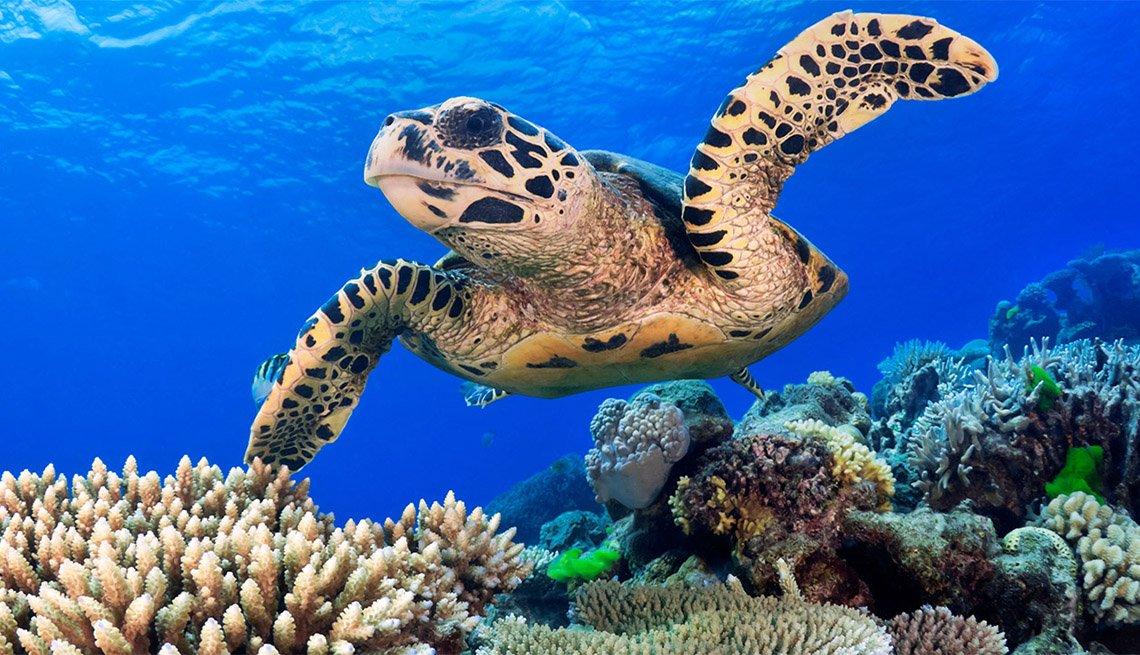 Tortuga marina cerca de un arrecife