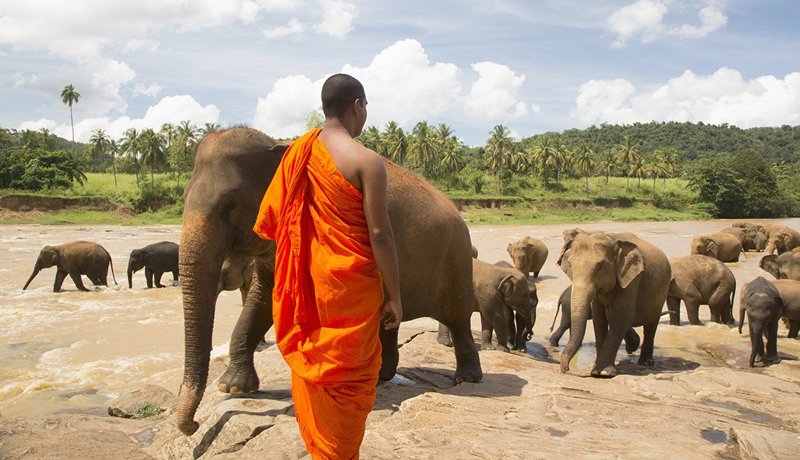 Buddhist Monk Tends To His Elephants In Sri Lanka, Island Getaways