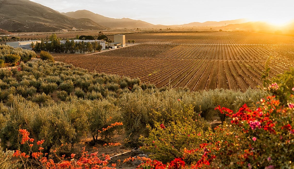 Vineyard and Winery at Sundown in the Valle de Guadalupe, Mexican Getaways, Travel