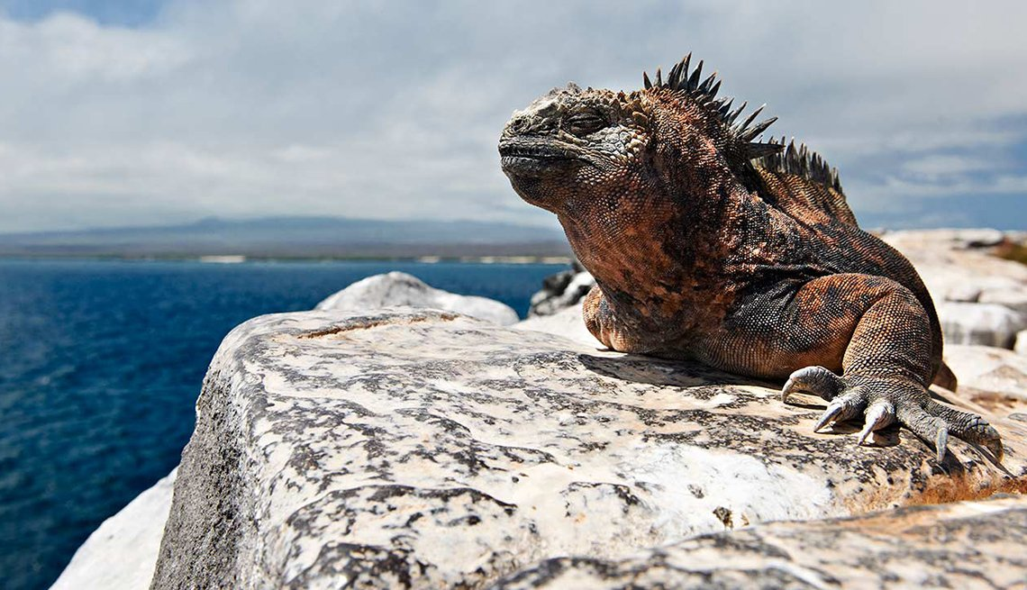 Close Up Of A Lizard On A Rock In Mexico, All Inclusive Mexican Resorts